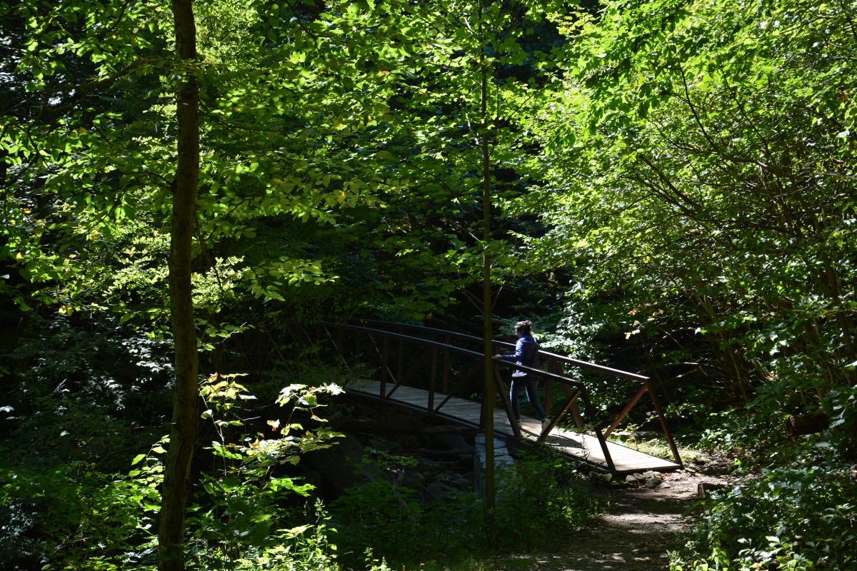 A bridge across a babbling brook? I'm definitely getting a pic!