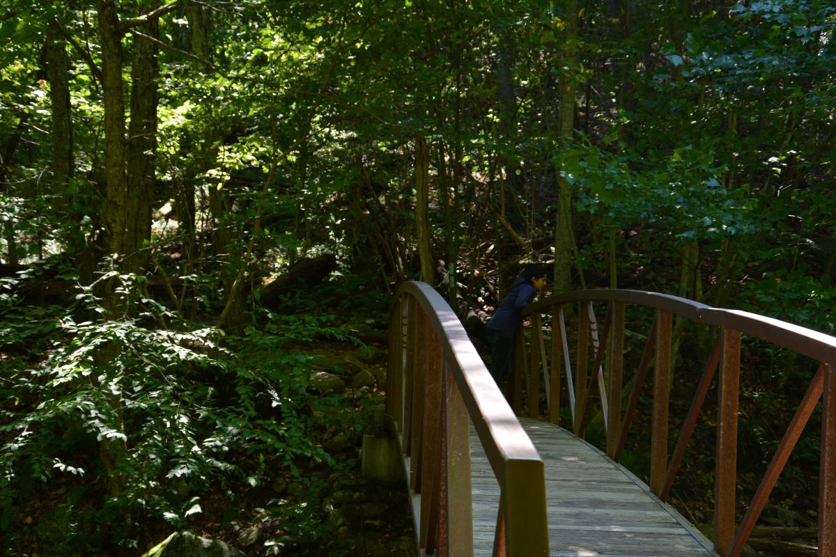 Quaint bridges dot the forest and help trekkers cross long distances faster